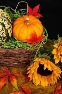 autumn-21454_640