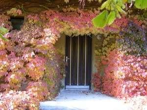autumn-80100_640